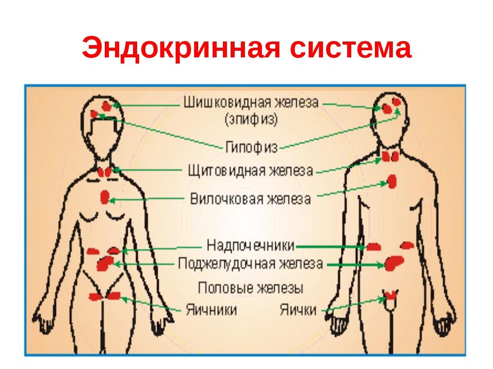 Нижний спастический парапарез лечение у детей